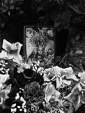 Ermira de Flores