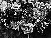 Flores de la Virgen