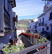 Macetas Gloriosas Calle Ancha