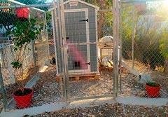 El Ayuntamiento habilita gateras con la colaboración de Esencia Animal