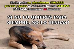 Plan de Choque sobre tenencia de animales dom�sticos