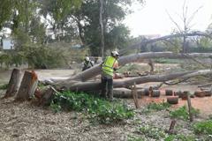 El Ayuntamiento acomete labores de poda y desbroce en los eucaliptos